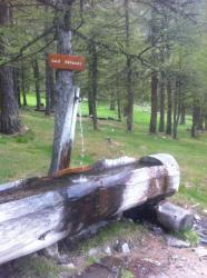 Le point d'eau à la lisière de la forêt